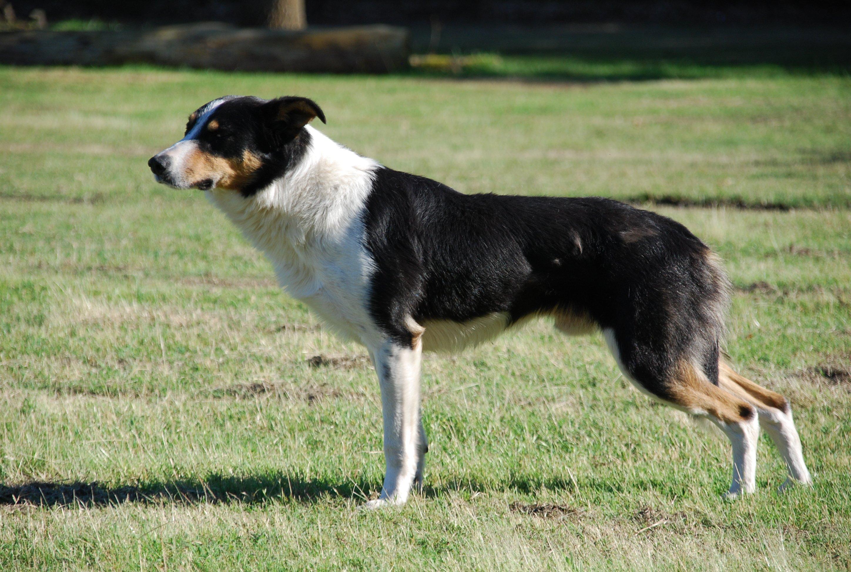 Chakira des mauves bruy res chavapa - Les chiens ne font pas des chats ...